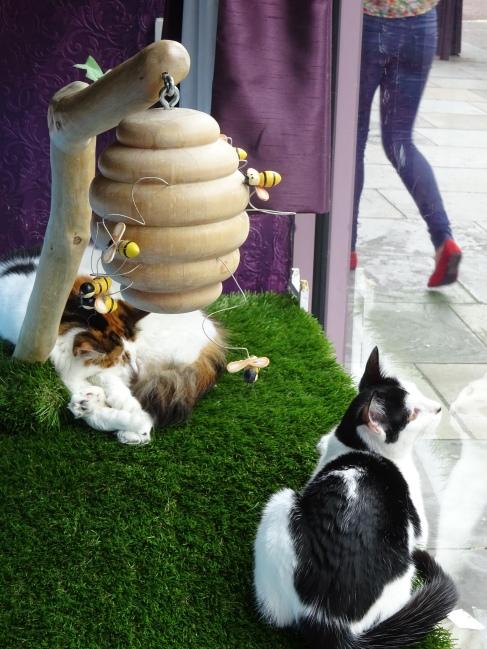 lady-dinahs-cat-emporium-03