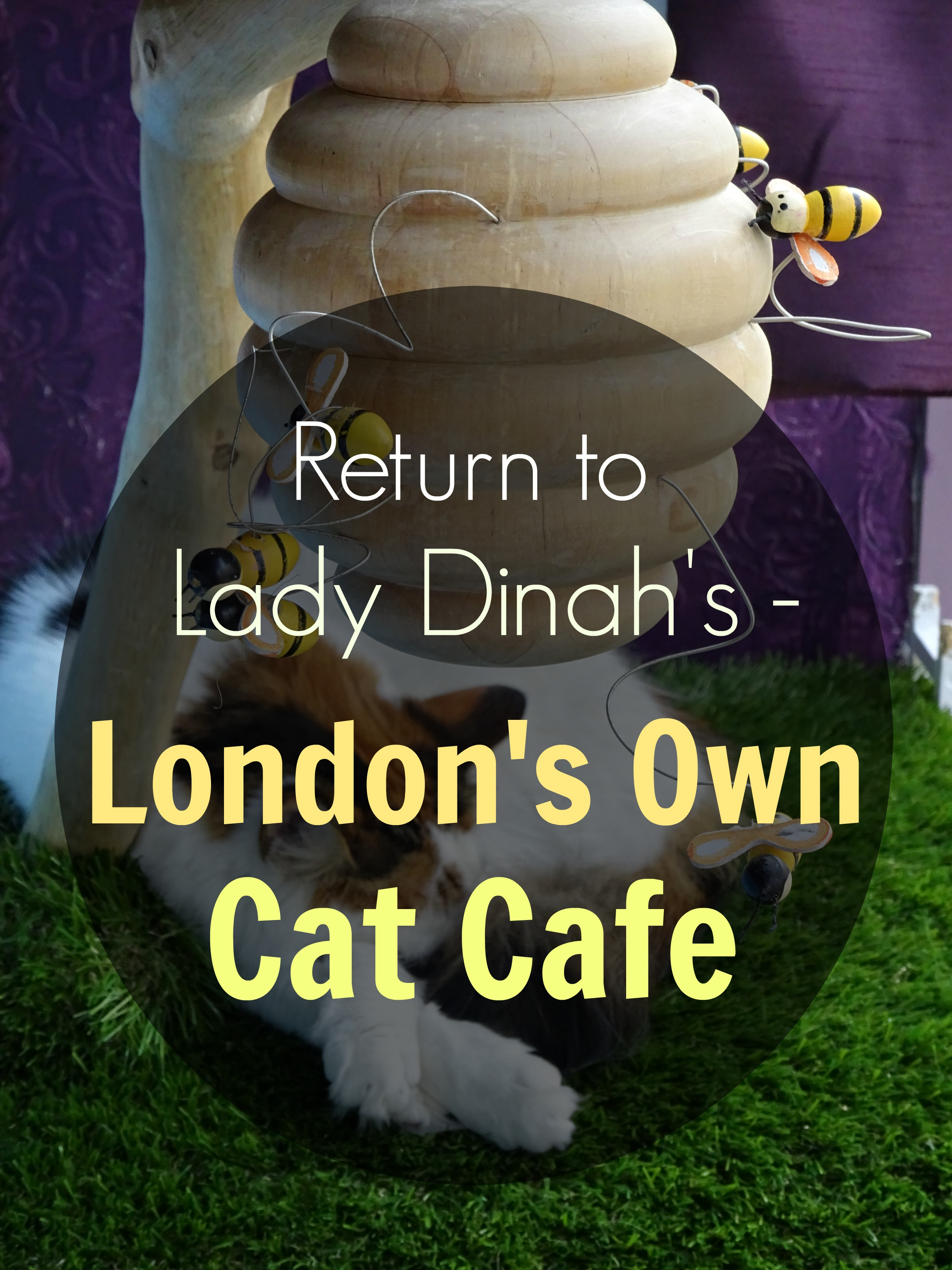 lady-dinahs-cat-emporium