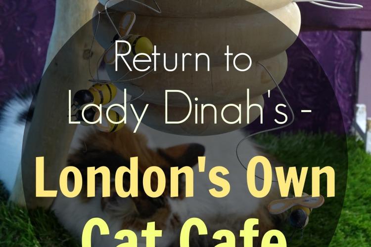 lady-dinahs-cat-emporium
