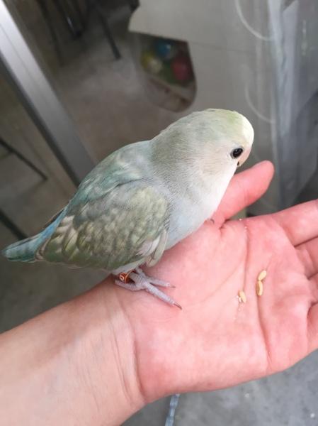 bird-cafe-japan