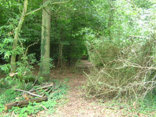 pluckley-screaming-woods