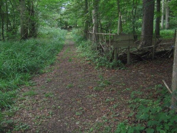 dering-woods-pluckley