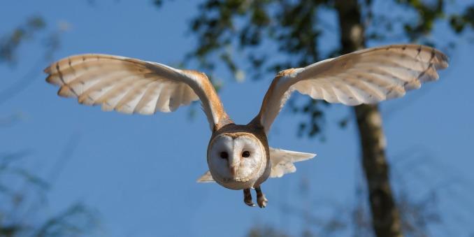 screech-owl-sanctuary