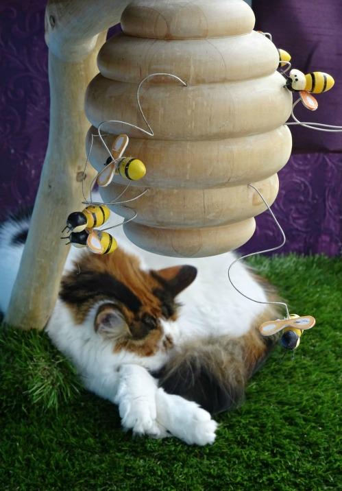 cat-cafe-uk