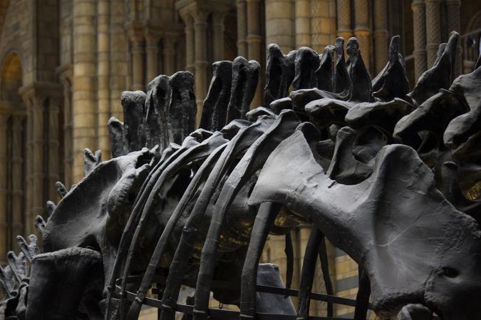 dinosaur-natural-history-museum