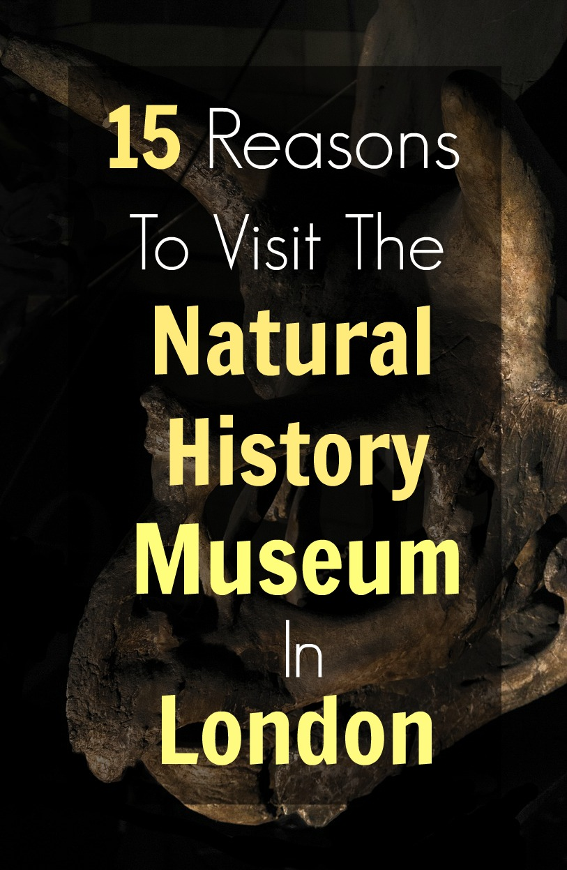 visit to the natural museum of history essay Evaluation of smithsonian institution national museum of natural history web site essay evaluation of smithsonian institution national museum of natural history web site essay writing and below it, are enlisted titles in the title bar that includes information on visit or travel.