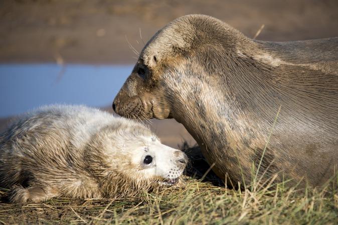seal-sanctuary-cornwall