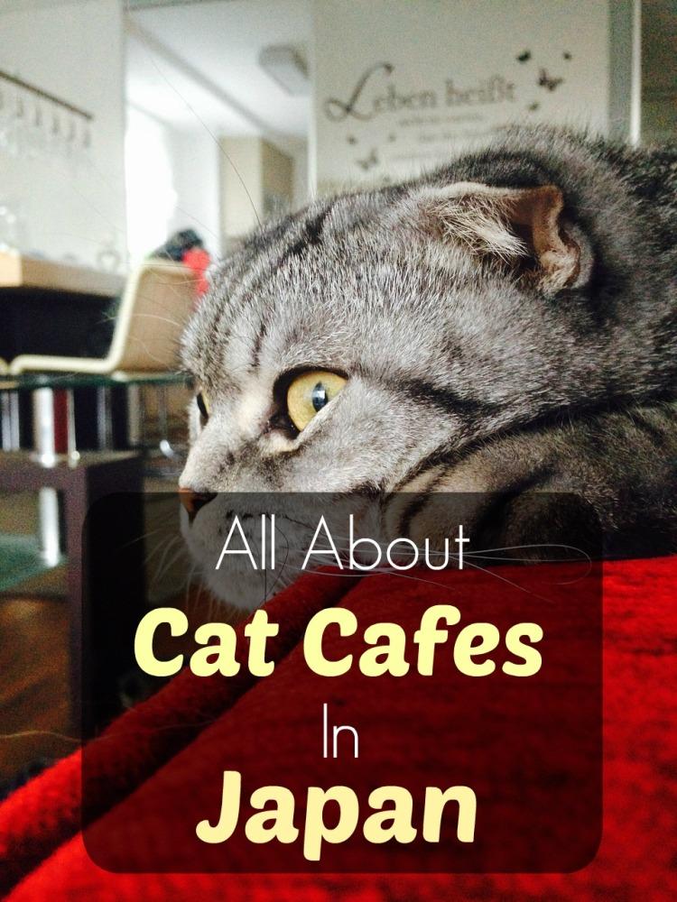 cat-cafe-japan